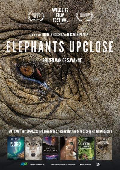 Elephants Up Close (11 screens)